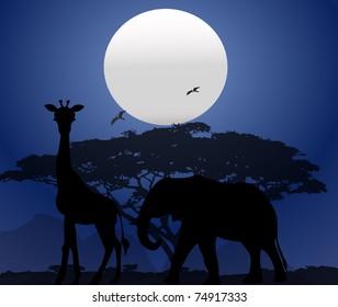 Africa at night (wild life)