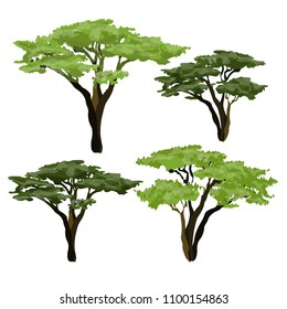 African acacia tree. Plants of Africa.