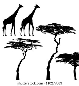 African animals, giraffe, vector silhouettes