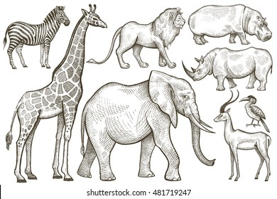African animals set. Elephant, giraffe, zebra, lion, hippo, rhino, antelope. Illustration Vector Art. Style Vintage engraving. Hand drawing isolated on white background.