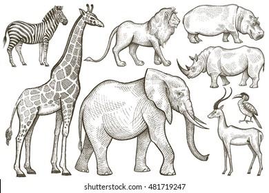 Animales africanos. Elefante, jirafa, cebra, león, hipopótamo, rinoceronte, antílope. Gráfica vectorial Art. Estilo Vintage. Dibujo manual aislado sobre fondo blanco.