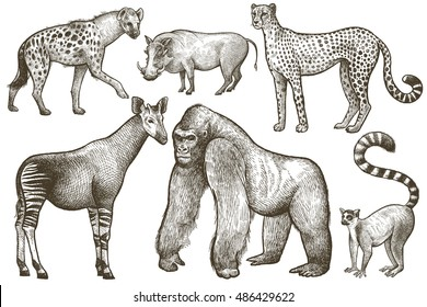 African animals set. Hyena, okapi, cheetah, gorilla, warthog, lemur. Illustration Vector Art. Style Vintage engraving. Hand drawing isolated on white background.