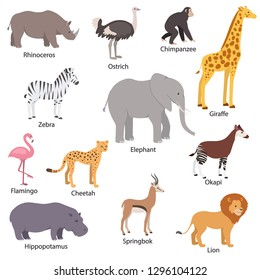 African animals set with titles. Wildlife Africa. Rhinoceros, ostrich, chimpanzee, zebra, elephant, giraffe, flamingo, cheetah, okapi, hippopotamus, springbok, lion. Isolated vector illustration