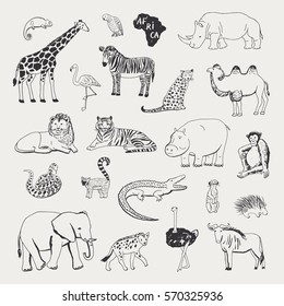 african animals vector illustrartions graphic set