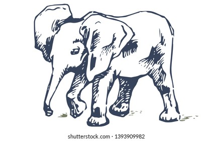 Elephant Draw Images Stock Photos Vectors Shutterstock