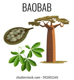 African baobab tree and fruit with seeds color icon emblem with text on white background. Vector illustration of powerful tree with green leaves and seed product.
