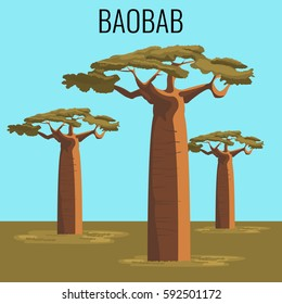 African baobab tree illustration. Vector illustration of powerful plant in realistic style