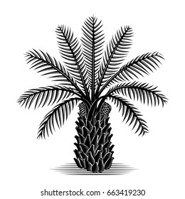African commercial black white tropical botanical woodcut art palm tree oil silhouette back ground vector plant agriculture food industry
