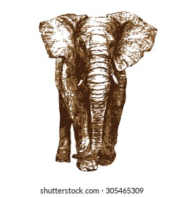 African Elephant facing forward, front view vector illustration. 2 colors with transparent background. Prints well on any color paper. Use for any digital or print project.