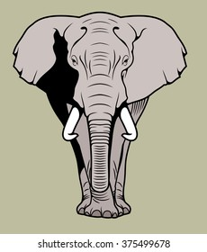 African elephant, front