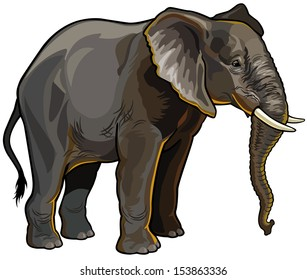 african elephant side view isolated on white background