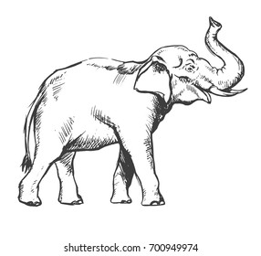 African elephant sketch drawing