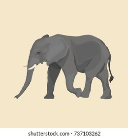 African elephant vector illustration isolated