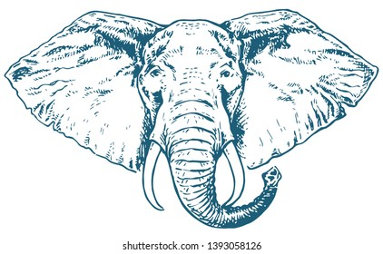 African elephant. Vintage hand drawn vector illustration engraving isolated on white background. Vector  graphic illustration of an elephant head. Can be used for t-shirt print, fashion design