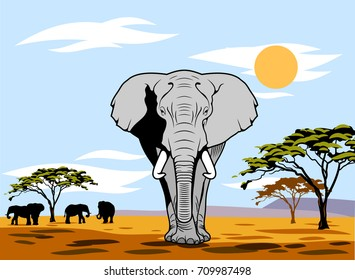 African landscape with summer sun and walking elephant