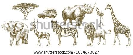 African safari animal Hand
