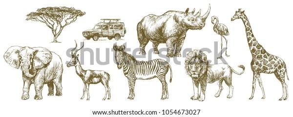 African safari animal. Hand drawn set.