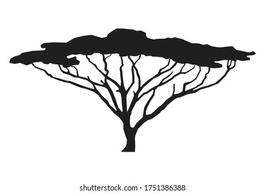 African tree isolated silhouette. Acacia tree silhouette.