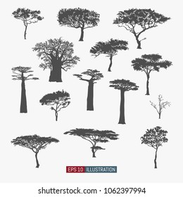 African tree isolated silhouettes set. Baobab, acacia and other. Elements for your design works. Vector illustration.