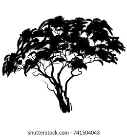 African tree silhouette. Vector illustration