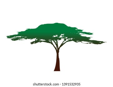 African tropical tree logo icon, acacia tree Savannah silhouette , green nature safari ecology concept, biological concept nature preservation trust, vector isolated on white background