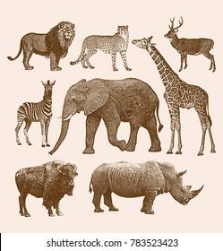 African Wild Animal Set Package 1
