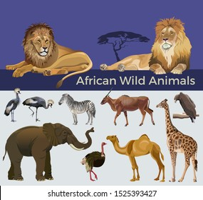 African wild animals: lions, zebra, antelope eland, elephant, giraffe, camel, eagle, crowned cranes and ostrich. Vector illustration isolated on white and blue background