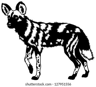 african wild dog,lycaon pictus,animal of africa,black and white side view image