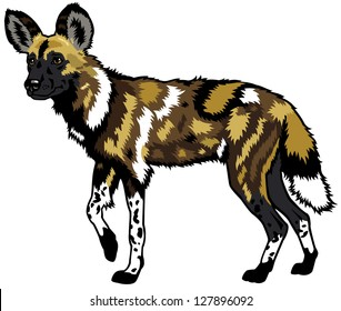 african wild dog,lycaon pictus,animal of africa,side view picture isolated on white background,vector illustration