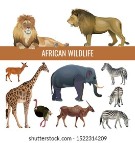 African wildlife: lions, zebras, antelopes, elephant, giraffe and ostrich. Vector illustration isolated on white background