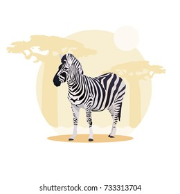 African zebra vector illustration with nature background