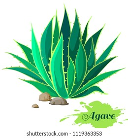 Agave image. Vector illustration.