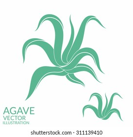Agave. Isolated plants on white background. Vector illustration