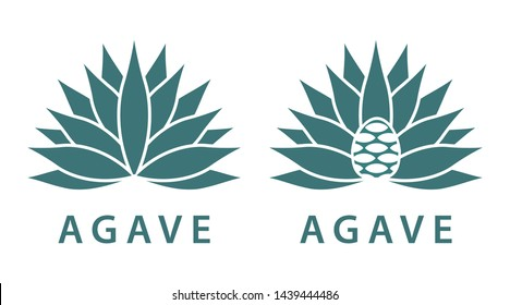 Agave, mexican plant for distill tequila