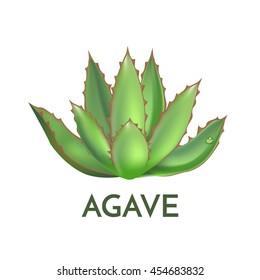 Agave plant green flower logo colorful vector illustration, symbol set