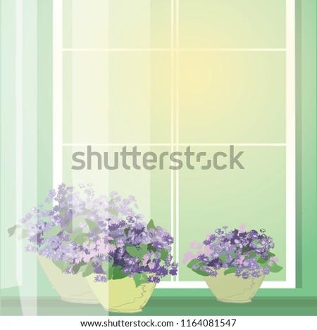 Lilac Flowers In Pots. Purple Garden Flowers. Fluffy Flowering.Autumn  Flowers