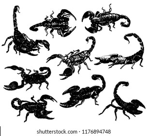 aggressive poisonous scorpions arachnids