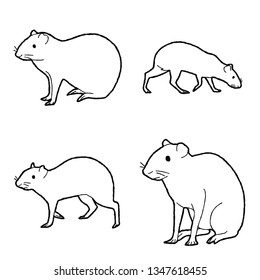 Agouti Vector Illustration Hand Drawn Animal Cartoon Art