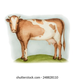 Agricultural animal, a cow standing on a green meadow, watercolor, vector illustration.