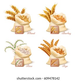 Agricultural cereals - wheat, barley, oat and rice vector. Set of sacks with grains oat and wheat, illustration of barley grain and rice
