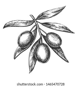 Agricultural Fresh Olive Tree Branch Ink Vector. Leaves And Olive Berries Organic Ingredient Mayonnaise Sauce, Element Canape And Caponata Salad. Designed Tree Detail Template Ink Illustration