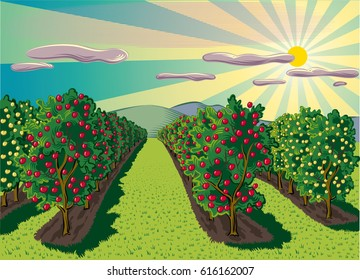 agricultural landscape, planted with fruit trees with apple trees.