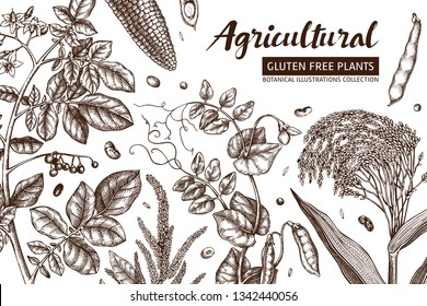 Agricultural plants design. Hand drawn botanical frame. Vegetarian and gluten free food illustration. Farm market products. Great for packaging, menu, label. Vector template. Outlines.
