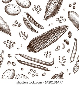Agricultural plants seamless pattern. Gluten free food background. Vector vegetables beans, roots, seeds, grains drawing in engraved style. Great for packaging, menu, label. High detailed legumes.