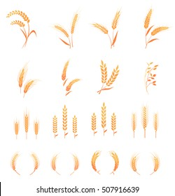Agricultural symbols. Concept for organic products label, harvest and farming, grain, bakery, healthy food.  Whole grain, natural, organic background for bakery package, bread products.