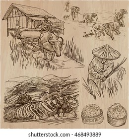 Agriculture - Life of a farmer. RICE CROP. Collection of hand drawn vector illustrations. Set of freehand sketches. Line art technique.