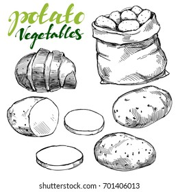 agriculture, potatoes vegetable set hand drawn vector illustration realistic sketch