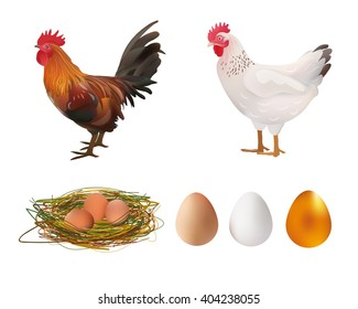 Agriculture Set. Realistic Rooster, Hen, Nest, Eggs. Vector Illustration. Farm.