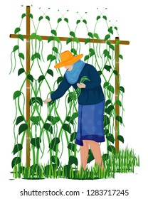 agriculturist harvest Lentils vector design