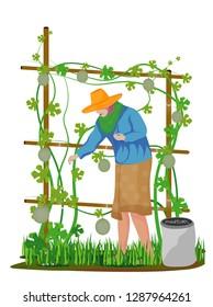 agriculturist manure cantaloupe plant vector design